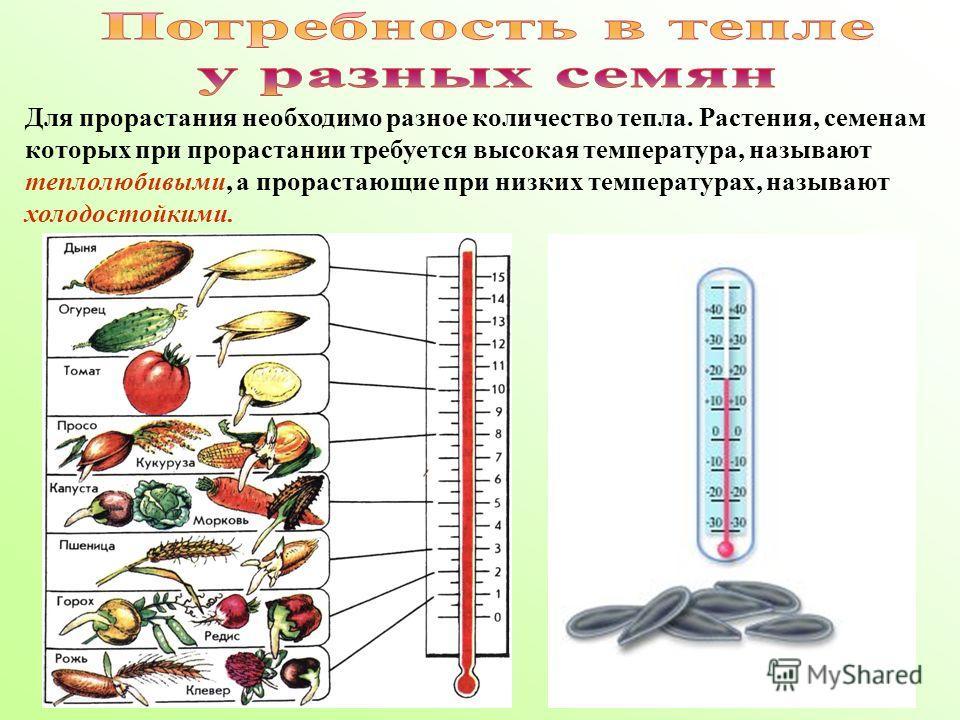 Для прорастания необходимо разное количество тепла. Растения, семенам которых при прорастании требуется высокая температура, называют теплолюбивыми, а прорастающие при низких температурах, называют холодостойкими.