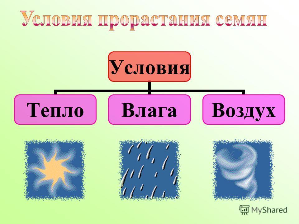 Условия ТеплоВлагаВоздух