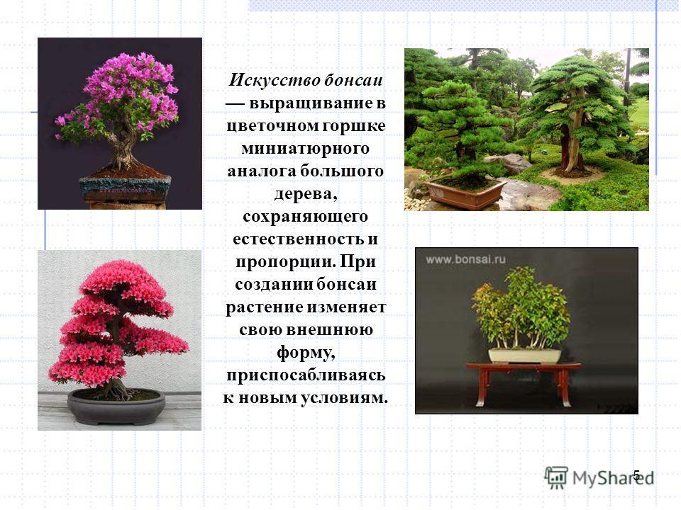 5 Искусство бонсаи выращивание в цветочном горшке миниатюрного аналога большого дерева, сохраняющего естественность и пропорции. При создании бонсаи растение изменяет свою внешнюю форму, приспосабливаясь к новым условиям.