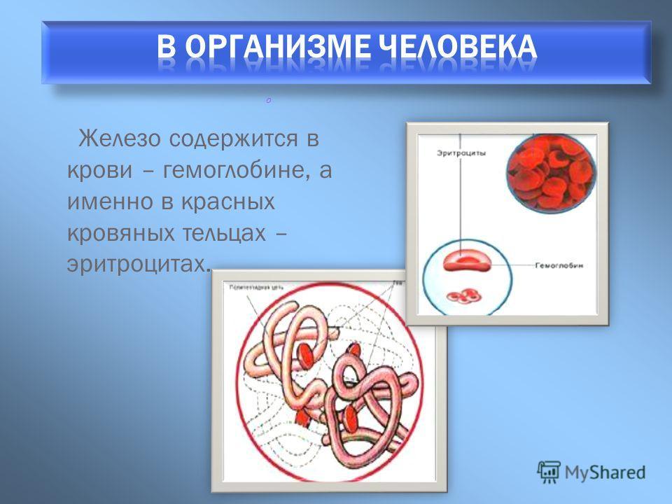 Железо содержится в крови – гемоглобине, а именно в красных кровяных тельцах – эритроцитах. о