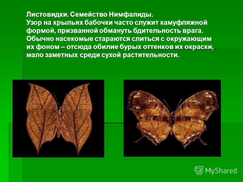 Листовидки. Семейство Нимфалиды. Узор на крыльях бабочки часто служит камуфляжной формой, призванной обмануть бдительность врага. Обычно насекомые стараются слиться с окружающим их фоном – отсюда обилие бурых оттенков их окраски, мало заметных среди