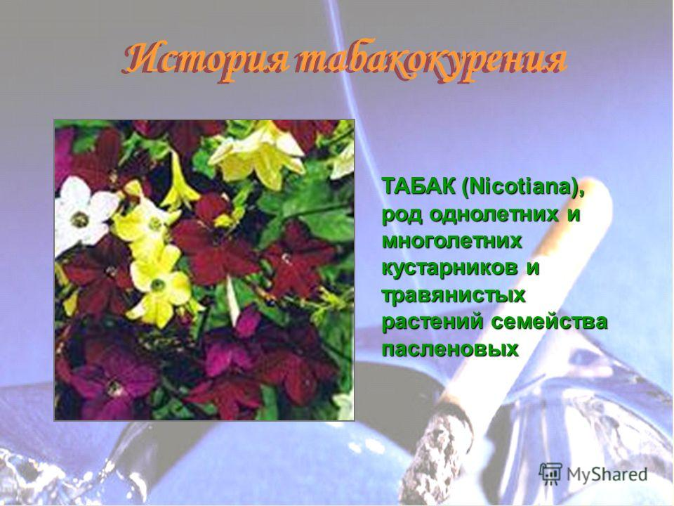ТАБАК (Nicotiana), род однолетних и многолетних кустарников и травянистых растений семейства пасленовых История табакокурения
