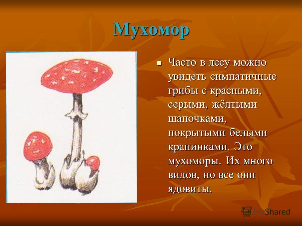 Мухомор Часто в лесу можно увидеть симпатичные грибы с красными, серыми, жёлтыми шапочками, покрытыми белыми крапинками. Это мухоморы. Их много видов, но все они ядовиты. Часто в лесу можно увидеть симпатичные грибы с красными, серыми, жёлтыми шапочк