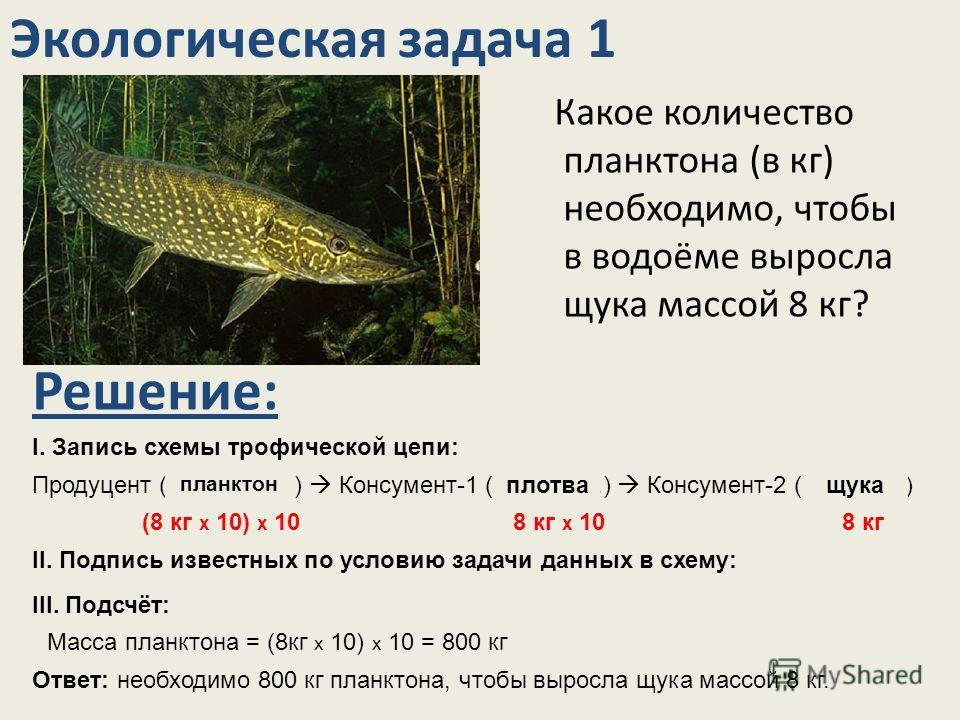 Какое количество планктона (в кг) необходимо, чтобы в водоёме выросла щука массой 8 кг? Экологическая задача 1 Решение: I. Запись схемы трофической цепи: Продуцент (…………….) Консумент-1 (…………..) Консумент-2 (………….)щука планктон плотва II. Подпись изве