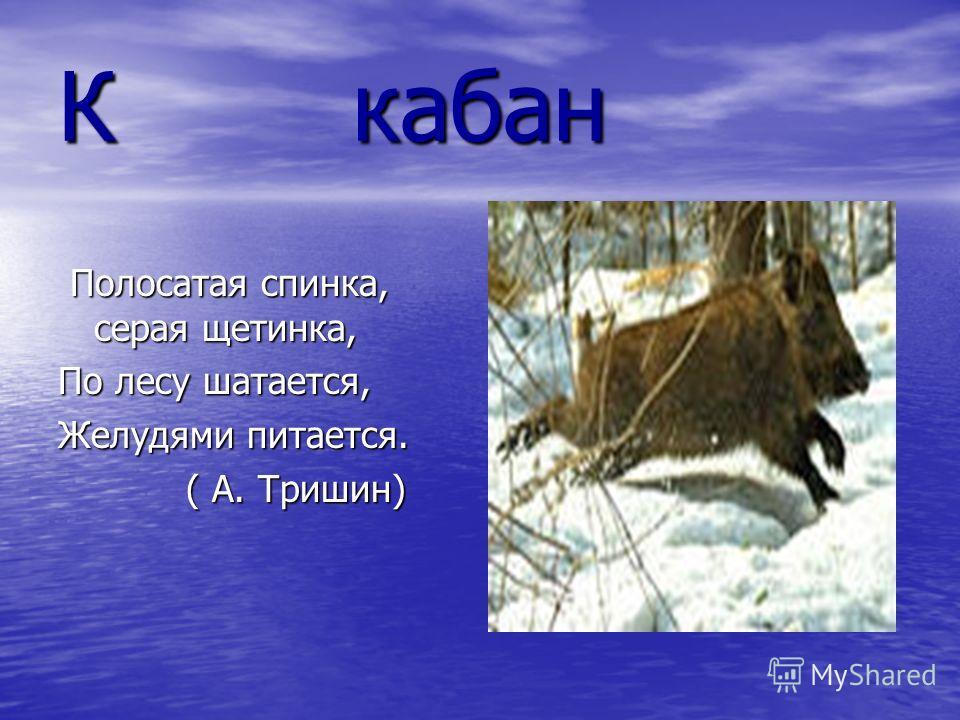К кабан Полосатая спинка, серая щетинка, Полосатая спинка, серая щетинка, По лесу шатается, Желудями питается. ( А. Тришин) ( А. Тришин)