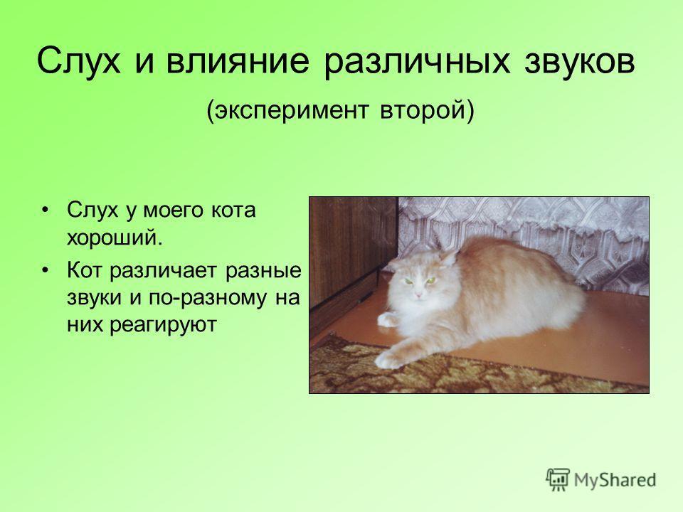 Слух и влияние различных звуков (эксперимент второй) Слух у моего кота хороший. Кот различает разные звуки и по-разному на них реагируют