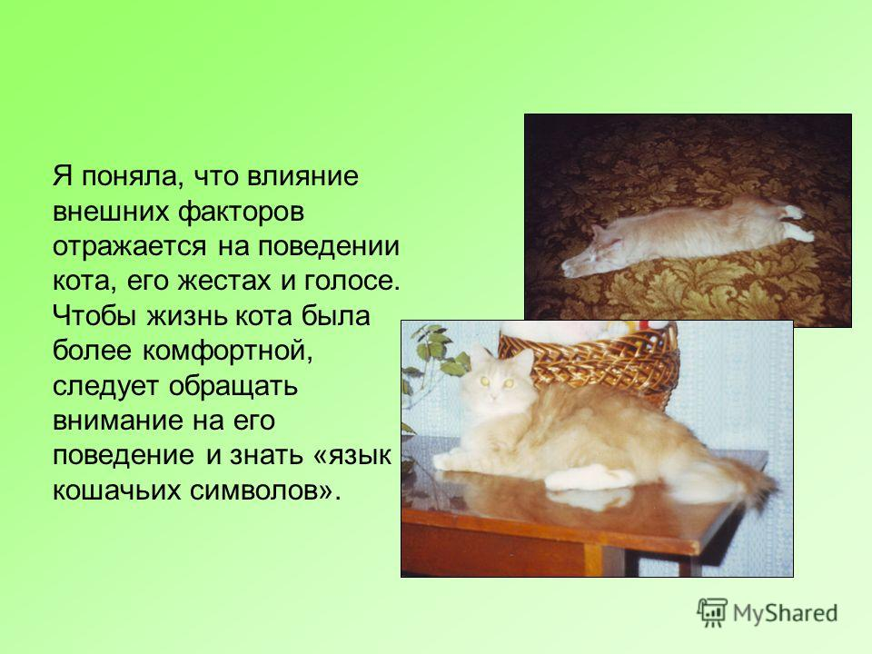 Я поняла, что влияние внешних факторов отражается на поведении кота, его жестах и голосе. Чтобы жизнь кота была более комфортной, следует обращать внимание на его поведение и знать «язык кошачьих символов».