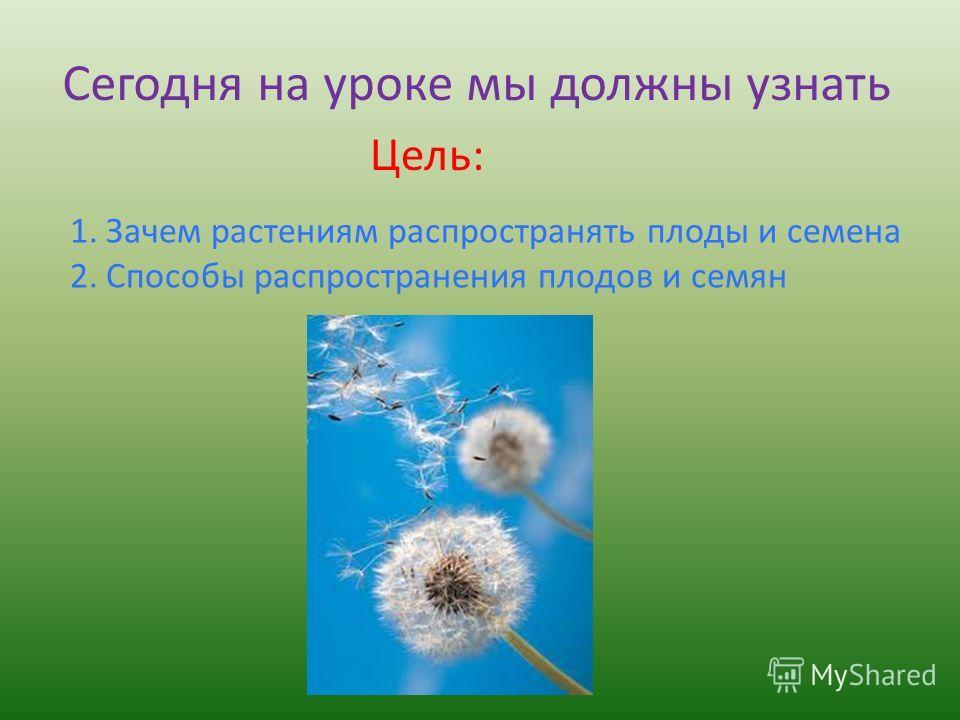 Сегодня на уроке мы должны узнать Цель: 1.Зачем растениям распространять плоды и семена 2.Способы распространения плодов и семян