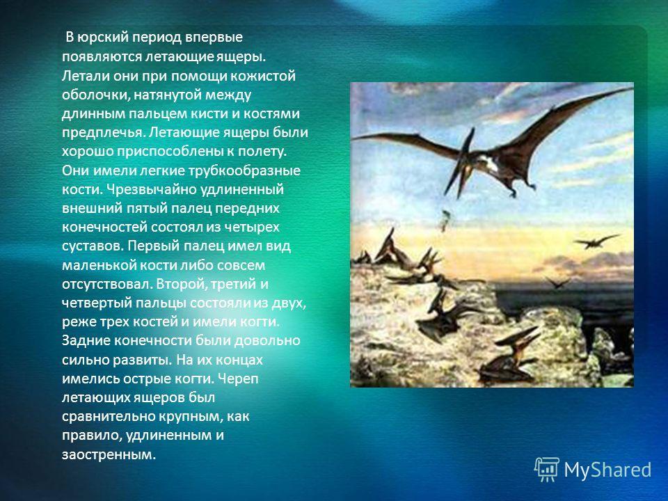 В юрский период впервые появляются летающие ящеры. Летали они при помощи кожистой оболочки, натянутой между длинным пальцем кисти и костями предплечья. Летающие ящеры были хорошо приспособлены к полету. Они имели легкие трубкообразные кости. Чрезвыча