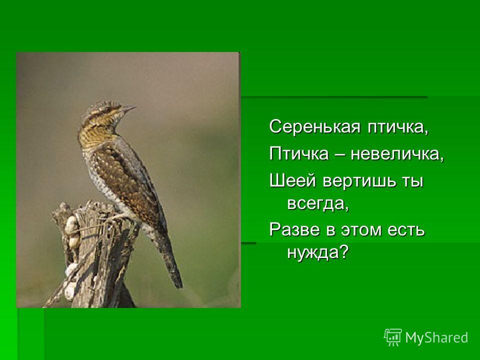 Серенькая птичка, Птичка – невеличка, Шеей вертишь ты всегда, Разве в этом есть нужда?