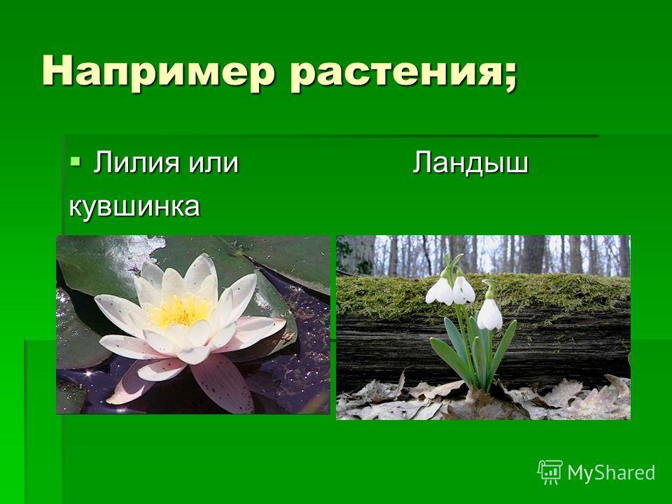Например растения; Лилия или Ландыш Лилия или Ландышкувшинка