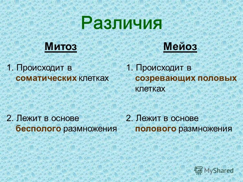 Сходства Имеют одинаковые фазы деления Перед митозом и мейозом происходит самоудвоение молекул ДНК в хромосомах (редупликация) и спирализация хромосом