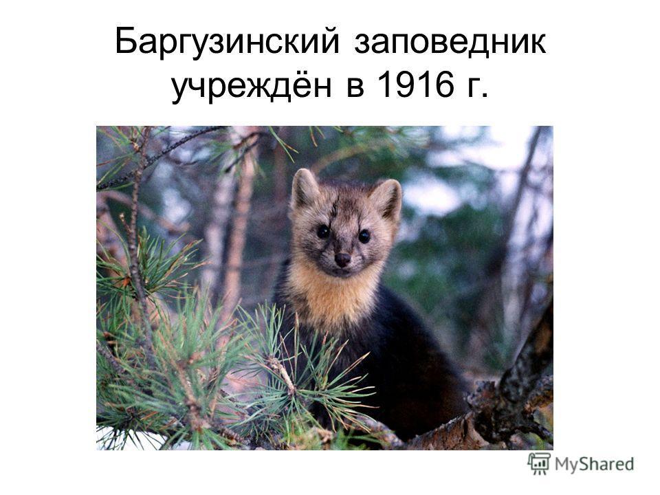 Баргузинский заповедник учреждён в 1916 г.