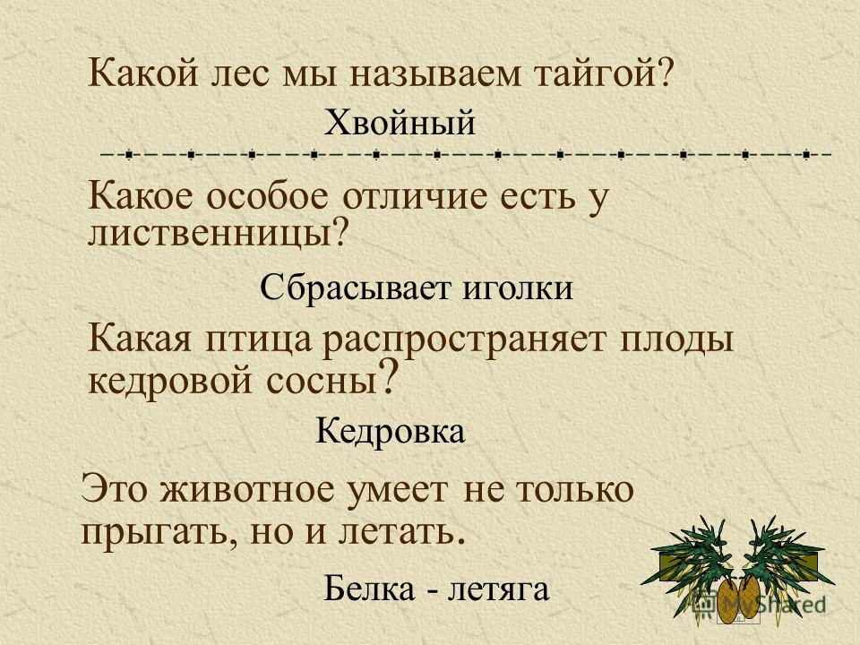 Какой лес мы называем тайгой? Хвойный Какое особое отличие есть у лиственницы? Сбрасывает иголки Какая птица распространяет плоды кедровой сосны ? Кедровка Это животное умеет не только прыгать, но и летать. Белка - летяга