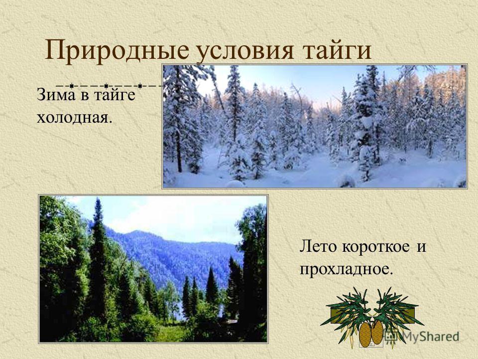Природные условия тайги Зима в тайге холодная. Лето короткое и прохладное.