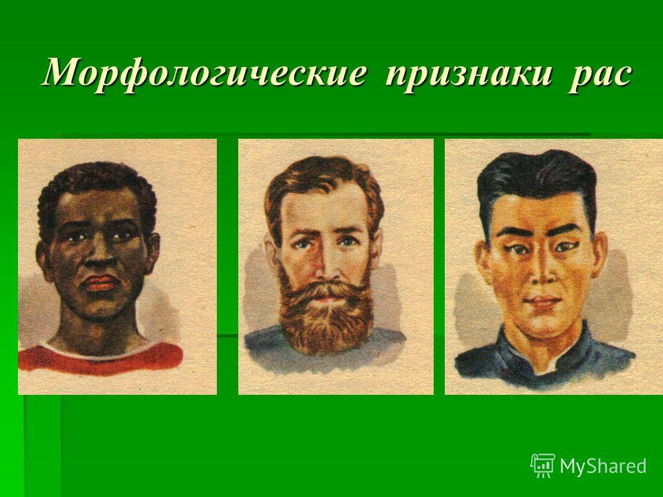 Морфологические признаки рас