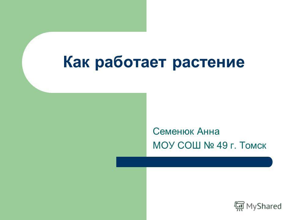 Как работает растение Семенюк Анна МОУ СОШ 49 г. Томск