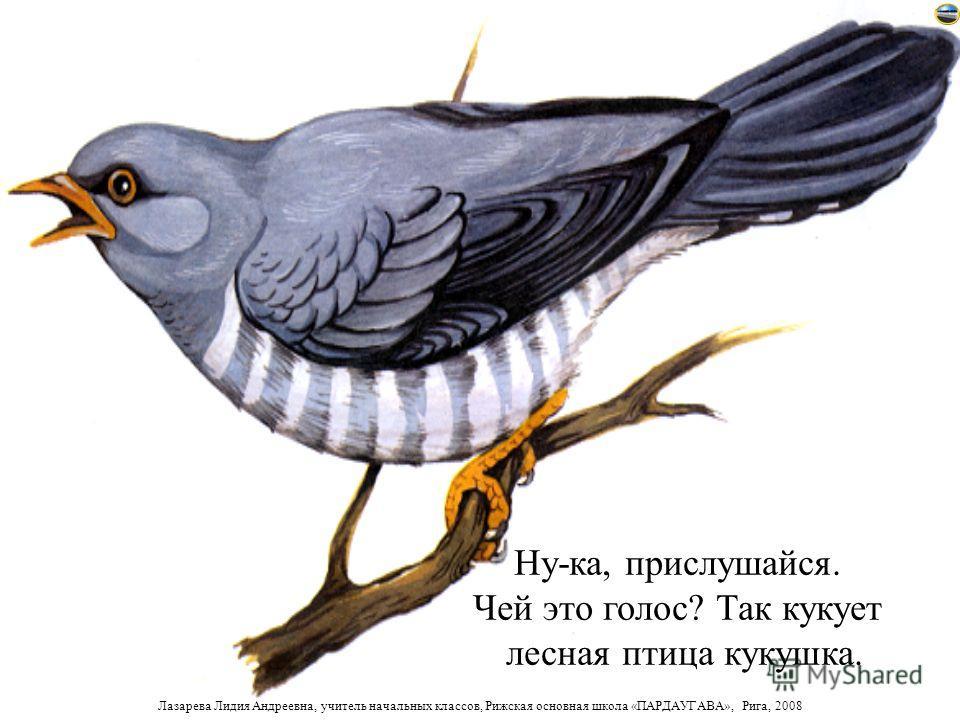 Лазарева Лидия Андреевна, учитель начальных классов, Рижская основная школа «ПАРДАУГАВА», Рига, 2008 Давай прогуляемся с тобой в лес. Узнаем, какие птицы и животные здесь живут и послушаем их голоса. Лес и его голоса