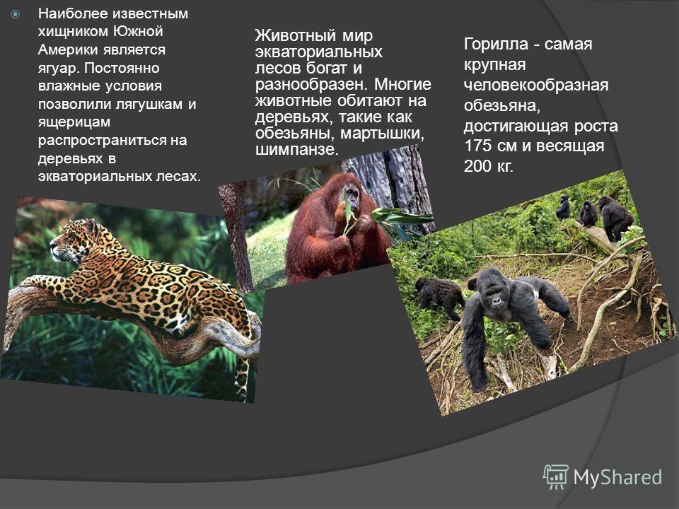 Наиболее известным хищником Южной Америки является ягуар. Постоянно влажные условия позволили лягушкам и ящерицам распространиться на деревьях в экваториальных лесах. Животный мир экваториальных лесов богат и разнообразен. Многие животные обитают на