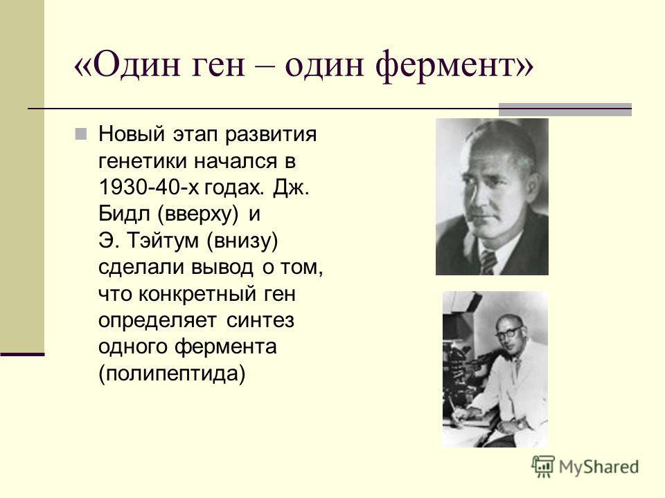 «Один ген – один фермент» Новый этап развития генетики начался в 1930-40-х годах. Дж. Бидл (вверху) и Э. Тэйтум (внизу) сделали вывод о том, что конкретный ген определяет синтез одного фермента (полипептида)