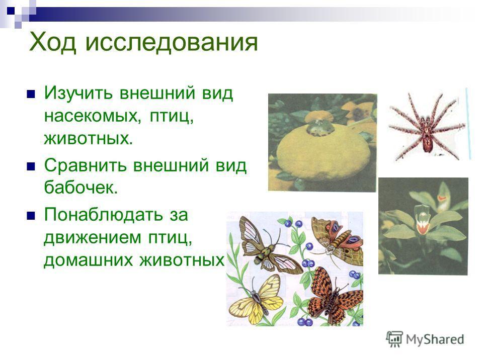 Ход исследования Изучить внешний вид насекомых, птиц, животных. Сравнить внешний вид бабочек. Понаблюдать за движением птиц, домашних животных