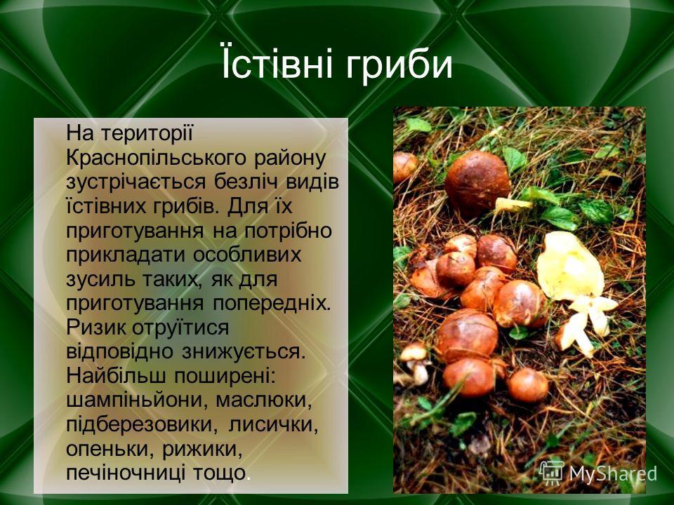Їстівні гриби На території Краснопільського району зустрічається безліч видів їстівних грибів. Для їх приготування на потрібно прикладати особливих зусиль таких, як для приготування попередніх. Ризик отруїтися відповідно знижується. Найбільш поширені