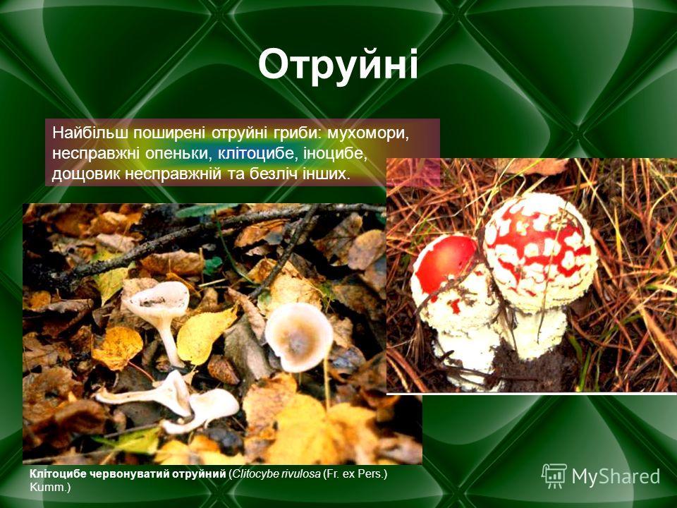 Отруйні Найбільш поширені отруйні гриби: мухомори, несправжні опеньки, клітоцибе, іноцибе, дощовик несправжній та безліч інших. Клітоцибе червонуватий отруйний (Clitocybe rivulosa (Fr. ex Pers.) Kumm.)