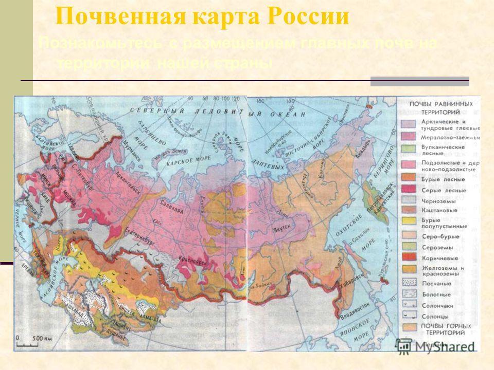 Почвенная карта России Познакомьтесь с размещением главных почв на территории нашей страны