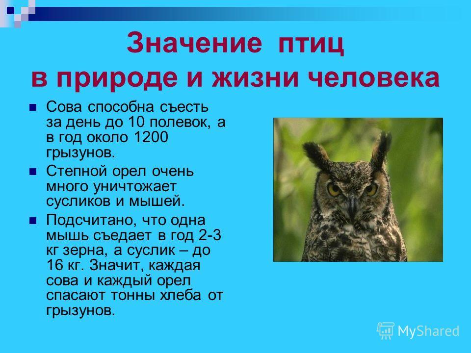 Значение птиц в природе и жизни человека Сова способна съесть за день до 10 полевок, а в год около 1200 грызунов. Степной орел очень много уничтожает сусликов и мышей. Подсчитано, что одна мышь съедает в год 2-3 кг зерна, а суслик – до 16 кг. Значит,
