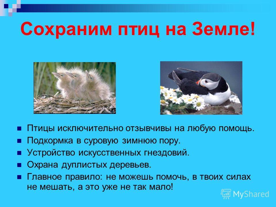 Сохраним птиц на Земле! Птицы исключительно отзывчивы на любую помощь. Подкормка в суровую зимнюю пору. Устройство искусственных гнездовий. Охрана дуплистых деревьев. Главное правило: не можешь помочь, в твоих силах не мешать, а это уже не так мало!
