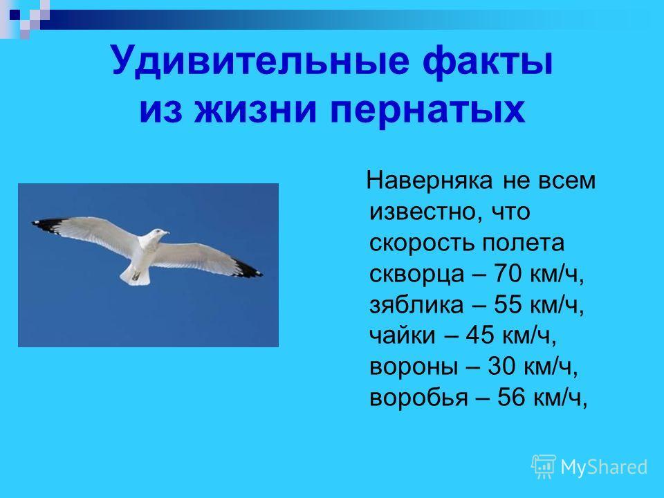Удивительные факты из жизни пернатых Наверняка не всем известно, что скорость полета скворца – 70 км/ч, зяблика – 55 км/ч, чайки – 45 км/ч, вороны – 30 км/ч, воробья – 56 км/ч,