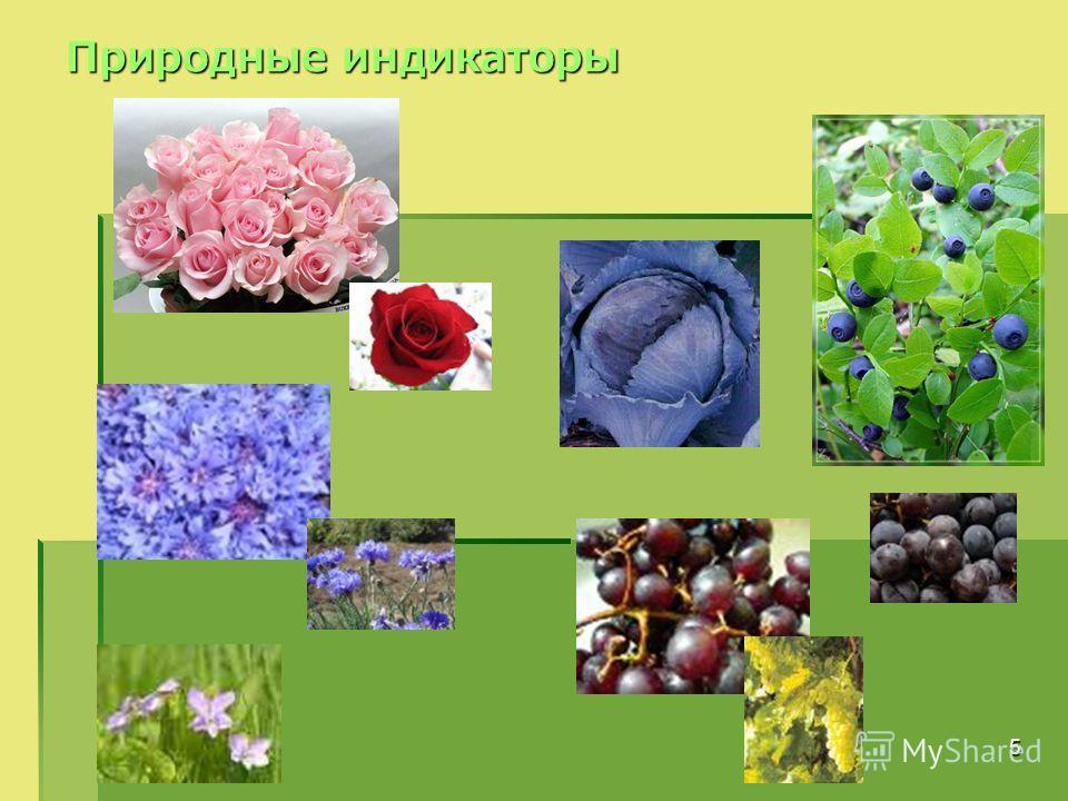 5 Природные индикаторы