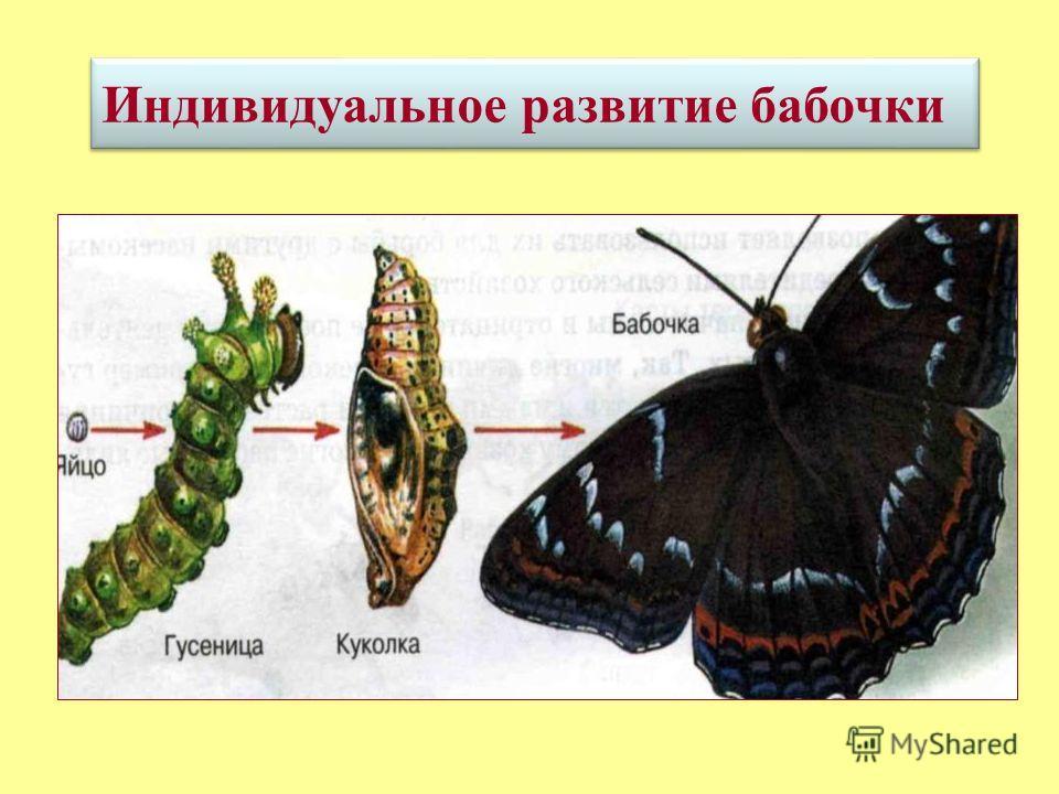 это совокупность преобразований (изменений), которые проходит организма от момента его возникновения и до конца жизни.