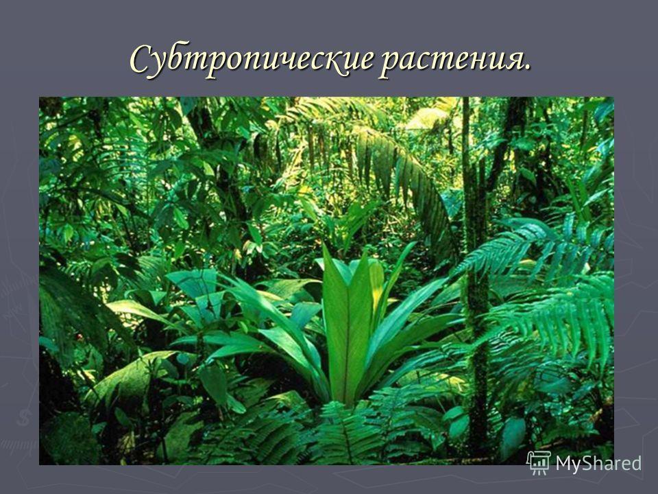 Субтропические растения.