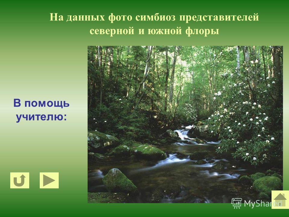 В помощь учителю: На данных фото симбиоз представителей северной и южной флоры