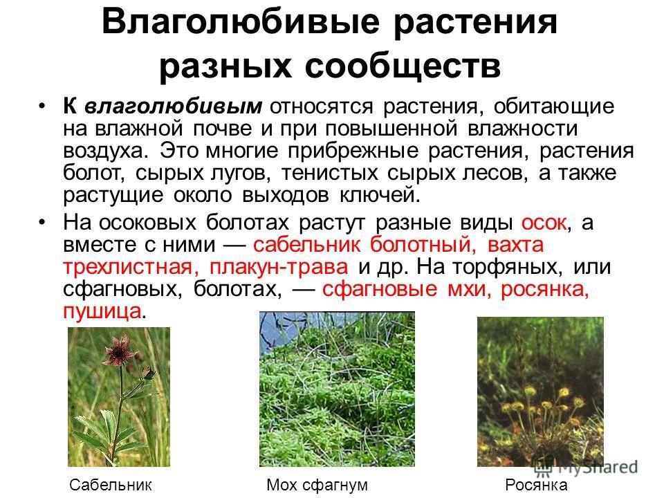 Влаголюбивые растения разных сообществ К влаголюбивым относятся растения, обитающие на влажной почве и при повышенной влажности воздуха. Это многие прибрежные растения, растения болот, сырых лугов, тенистых сырых лесов, а также растущие около выходов