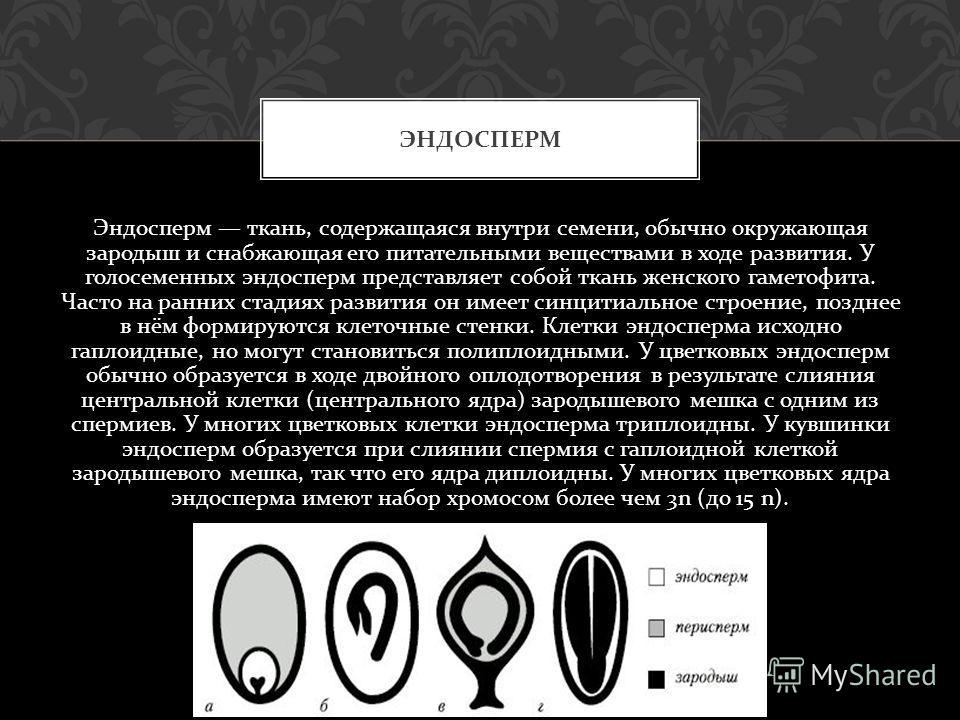 Эндосперм ткань, содержащаяся внутри семени, обычно окружающая зародыш и снабжающая его питательными веществами в ходе развития. У голосеменных эндосперм представляет собой ткань женского гаметофита. Часто на ранних стадиях развития он имеет синцитиа
