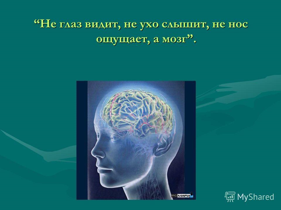 Не глаз видит, не ухо слышит, не нос ощущает, а мозг.