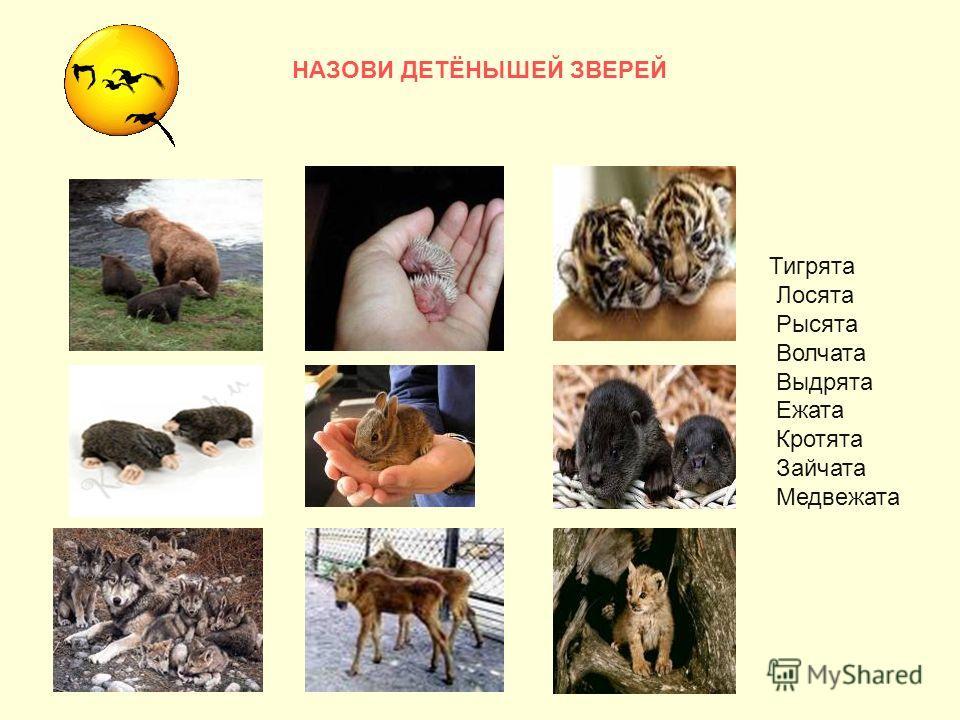 НАЗОВИ ДЕТЁНЫШЕЙ ЗВЕРЕЙ Тигрята Лосята Рысята Волчата Выдрята Ежата Кротята Зайчата Медвежата