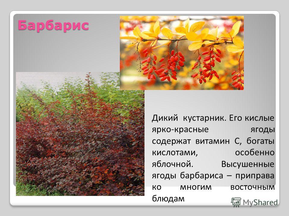 Барбарис Дикий кустарник. Его кислые ярко-красные ягоды содержат витамин С, богаты кислотами, особенно яблочной. Высушенные ягоды барбариса – приправа ко многим восточным блюдам