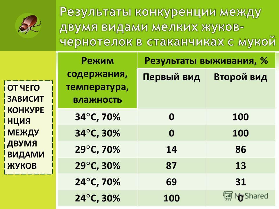 Режим содержания, температура, влажность Результаты выживания, % Первый видВторой вид 34 C, 70% 0100 34 C, 30% 0100 29 C, 70% 1486 29 C, 30% 8713 24 C, 70% 6931 24 C, 30% 1000 ОТ ЧЕГО ЗАВИСИТ КОНКУРЕ НЦИЯ МЕЖДУ ДВУМЯ ВИДАМИ ЖУКОВ