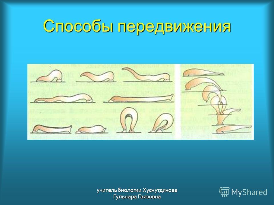 Способы передвижения учитель биологии Хуснутдинова Гульнара Гаязовна