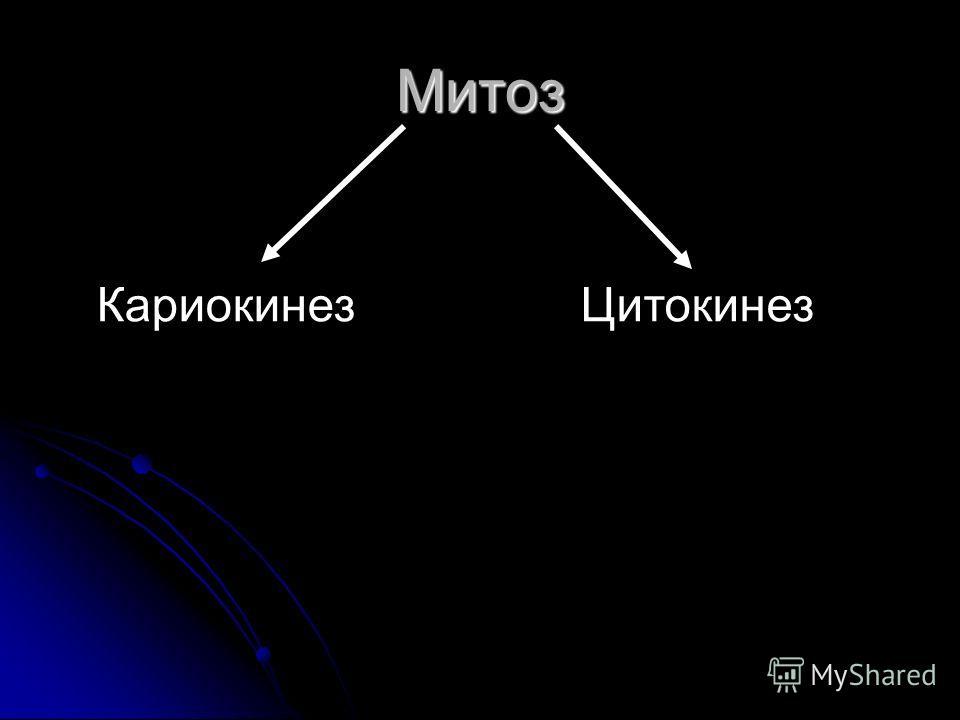 Митоз КариокинезЦитокинез