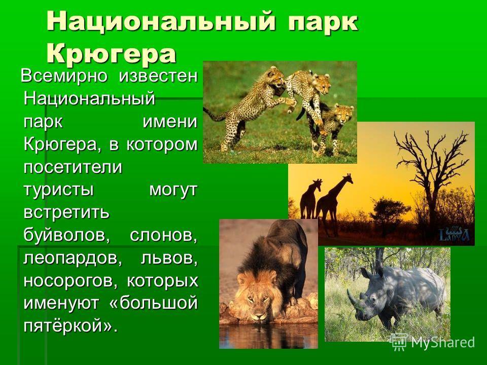 Национальный парк Крюгера Всемирно известен Национальный парк имени Крюгера, в котором посетители туристы могут встретить буйволов, слонов, леопардов, львов, носорогов, которых именуют «большой пятёркой». Всемирно известен Национальный парк имени Крю