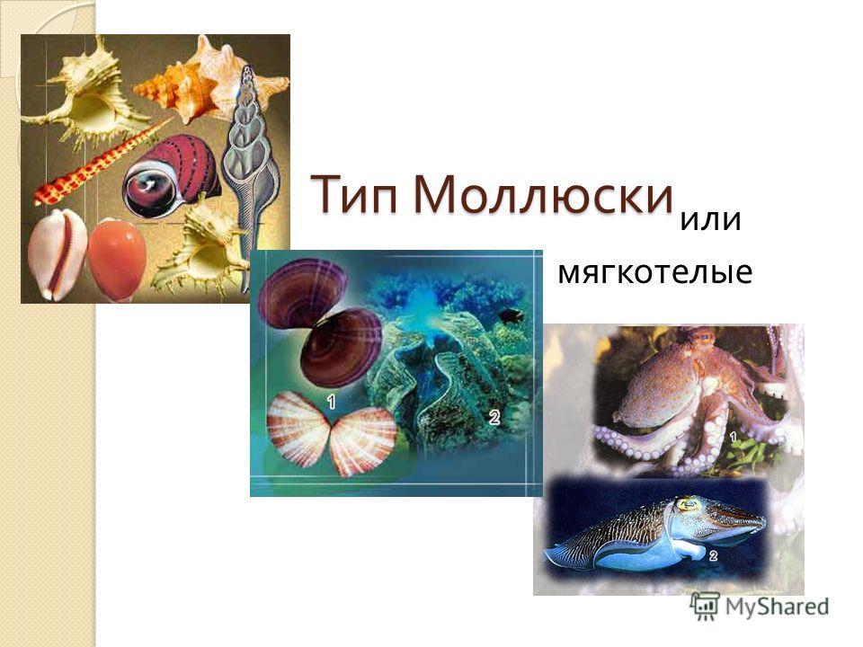 Тип Моллюски Тип Моллюски или мягкотелые