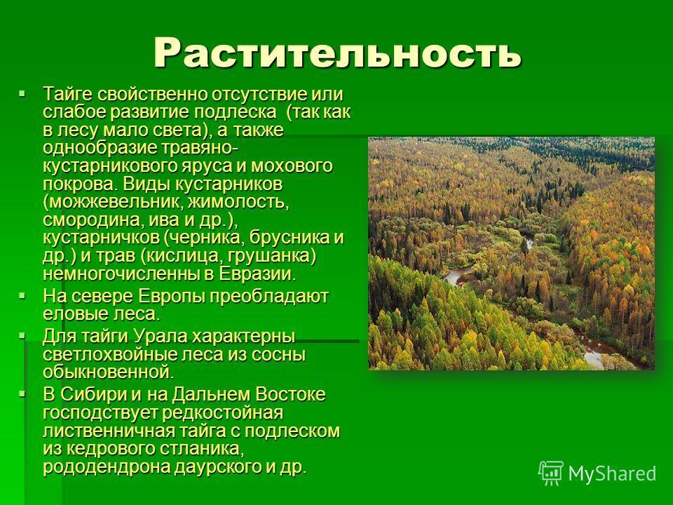 Растительность Тайге свойственно отсутствие или слабое развитие подлеска (так как в лесу мало света), а также однообразие травяно- кустарникового яруса и мохового покрова. Виды кустарников (можжевельник, жимолость, смородина, ива и др.), кустарничков