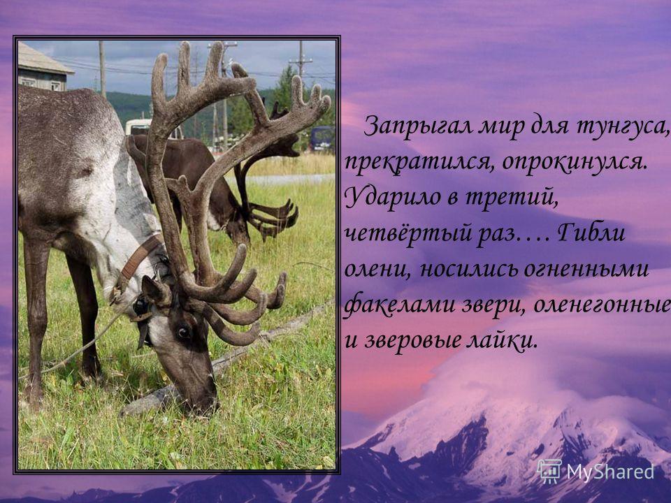 Запрыгал мир для тунгуса, прекратился, опрокинулся. Ударило в третий, четвёртый раз…. Гибли олени, носились огненными факелами звери, оленегонные и зверовые лайки.