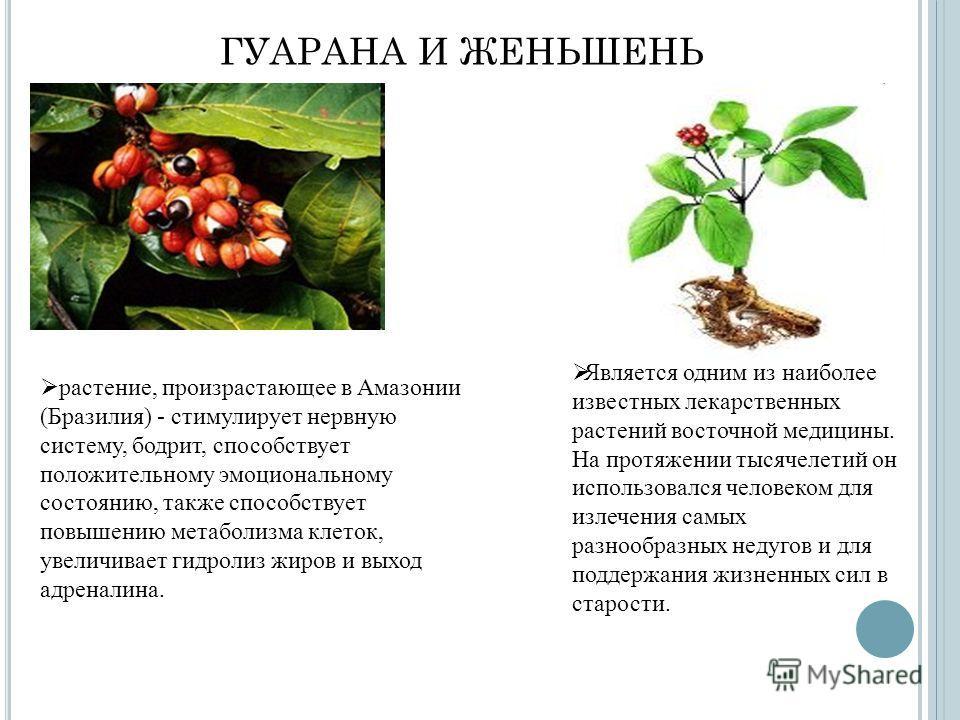 ГУАРАНА И ЖЕНЬШЕНЬ растение, произрастающее в Амазонии (Бразилия) - стимулирует нервную систему, бодрит, способствует положительному эмоциональному состоянию, также способствует повышению метаболизма клеток, увеличивает гидролиз жиров и выход адренал