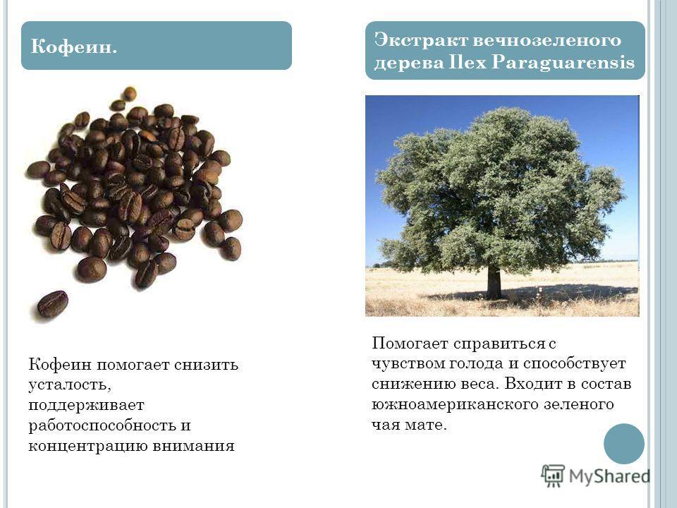 Кофеин. Экстракт вечнозеленого дерева Ilex Paraguarensis Кофеин помогает снизить усталость, поддерживает работоспособность и концентрацию внимания Помогает справиться с чувством голода и способствует снижению веса. Входит в состав южноамериканского з