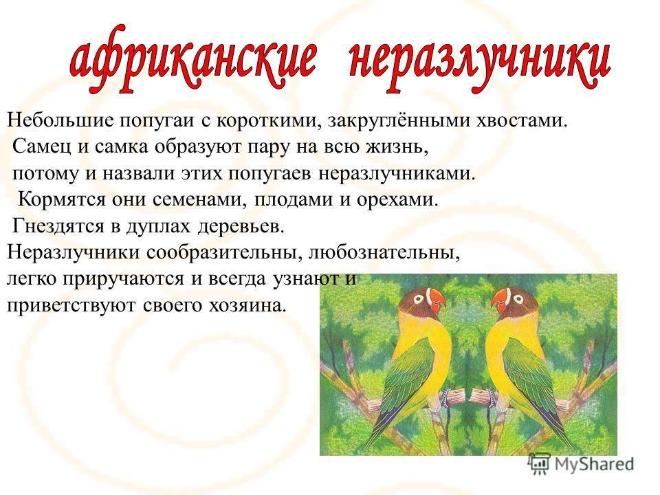 Небольшие попугаи с короткими, закруглёнными хвостами. Самец и самка образуют пару на всю жизнь, потому и назвали этих попугаев неразлучниками. Кормятся они семенами, плодами и орехами. Гнездятся в дуплах деревьев. Неразлучники сообразительны, любозн